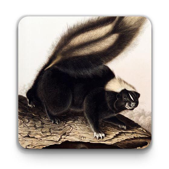 John James Audubon 'American Skunk' coaster