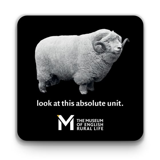 'The Absolute Unit' coasters – 4-piece set