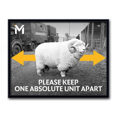 'Please Keep One Absolute Unit Apart' framed poster