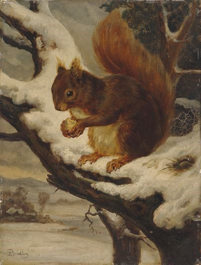 A Red Squirrel Eating a Nut