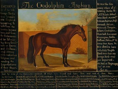 'The Godolphin Arabian'