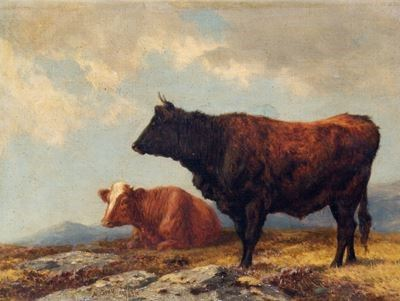 Brindled Cattle