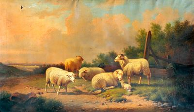 Study of Sheep