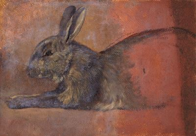 Study of a Rabbit