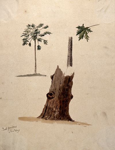A Palm Tree with Detailed Paintings of the Trunk and Leaf